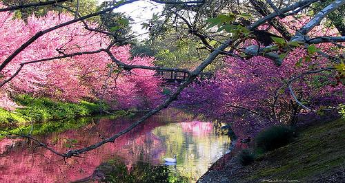 Uc Davis Arboretum 187 Venue Vixens